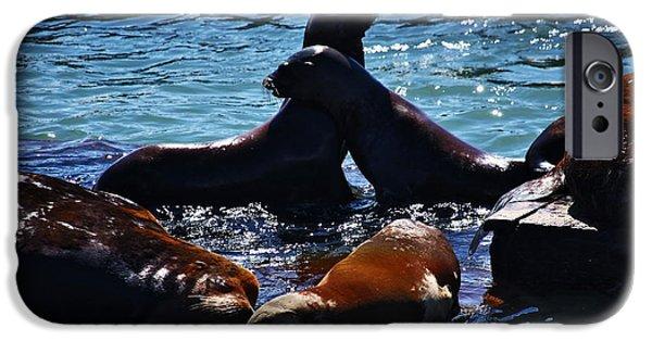 Sea Platform iPhone Cases - Sea Lions In San Francisco Bay iPhone Case by Aidan Moran
