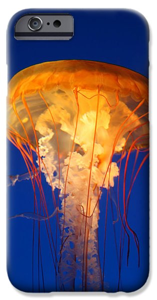 Underwater Photos iPhone Cases - Sea Nettles 12 iPhone Case by Donna Corless