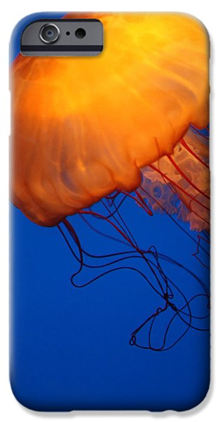 Underwater Photos iPhone Cases - Sea Nettles iPhone Case by Donna Corless