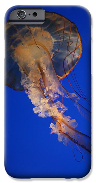 Underwater Photos iPhone Cases - Sea Nettles v 11 iPhone Case by Donna Corless