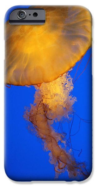 Underwater Photos iPhone Cases - Sea Nettles v 3 iPhone Case by Donna Corless