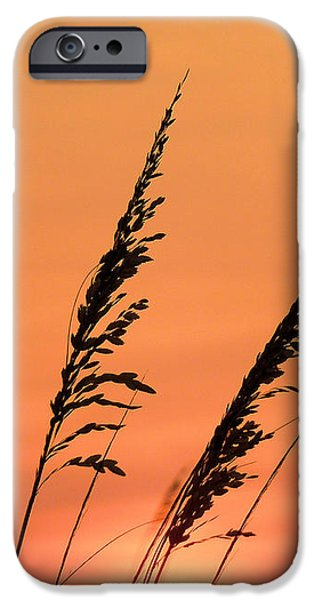 Sea Oat Sunset iPhone Case by JC Findley