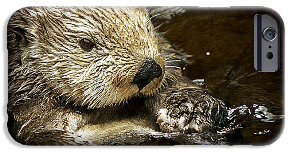 Otter Digital Art iPhone Cases - Sea Otter iPhone Case by Maria Angelica Maira
