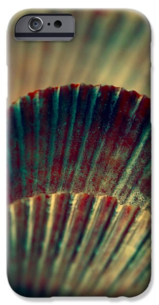 Beach Art iPhone Cases - Sea Shell Art 2 iPhone Case by Bonnie Bruno