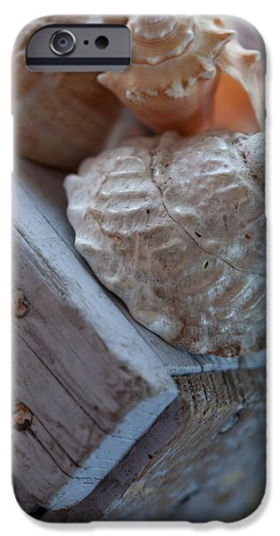 Wooden Crate iPhone Cases - Sea Shells 2 iPhone Case by Bonnie Bruno