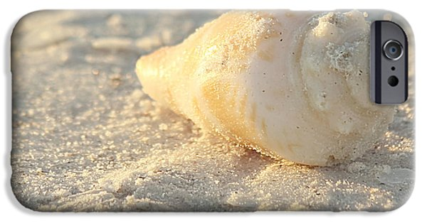 Kim Photographs iPhone Cases - Sea Shells iPhone Case by Kim Hojnacki