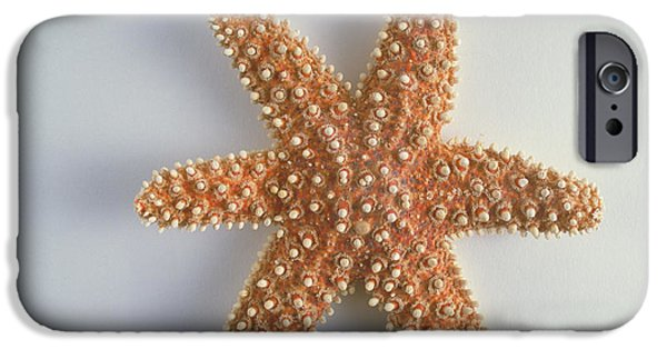 Radial Symmetry Photographs iPhone Cases - Sea Star iPhone Case by Barbara Strnadova
