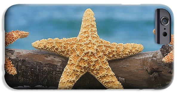 Basket iPhone Cases - Sea Star Trio on Driftwood iPhone Case by Cathy Lindsey