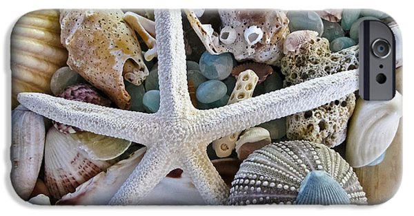 Decorative Art iPhone Cases - Sea Treasure iPhone Case by Colleen Kammerer