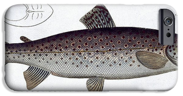 Wild Trout iPhone Cases - Sea Trout iPhone Case by Andreas Ludwig Kruger