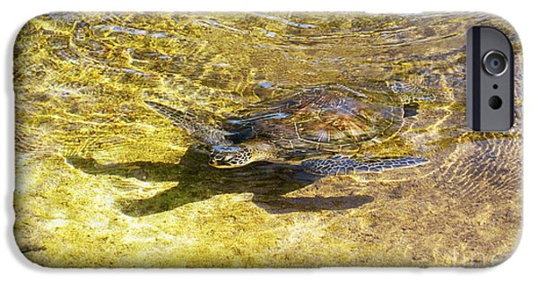 Kemp iPhone Cases - Sea Turtle 2 iPhone Case by Cheryl Young