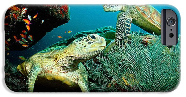 Dirty iPhone Cases - Sea turtle Oil on canvas iPhone Case by Don Kuing