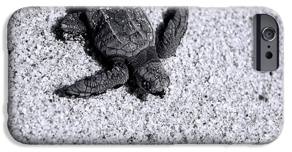 Sand iPhone Cases - Sea Turtle in Black and White iPhone Case by Sebastian Musial