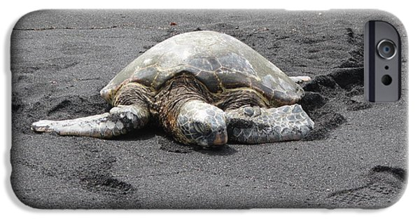 Marine iPhone Cases - Sea Turtle On Black Sand Beach iPhone Case by Sharon Patterson