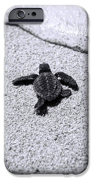 Study iPhone Cases - Sea Turtle iPhone Case by Sebastian Musial