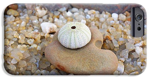 Agate Beach Oregon iPhone Cases - Sea Urchin Art prints Coastal Beach Agates iPhone Case by Baslee Troutman