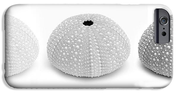 Monotone iPhone Cases - Sea Urchins Black and White iPhone Case by Jennie Marie Schell