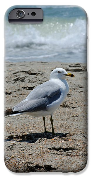White House iPhone Cases - Seagull 1 Series 1 iPhone Case by Kelly Nowak