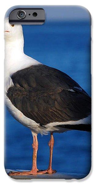 Seagull 2 iPhone Case by Debra Thompson