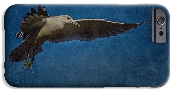 Seagull iPhone Cases - Seagull 2 iPhone Case by Ernie Echols