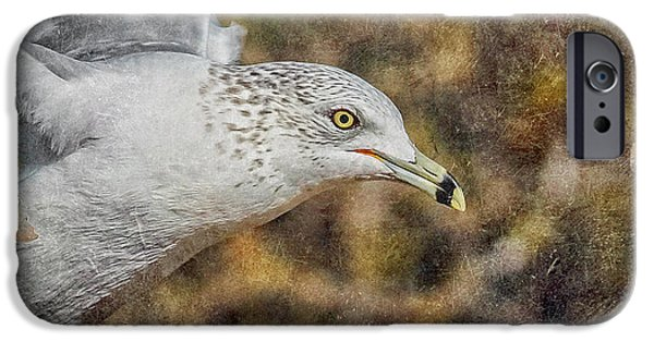 Seagull iPhone Cases - Seagull 3 iPhone Case by Ernie Echols