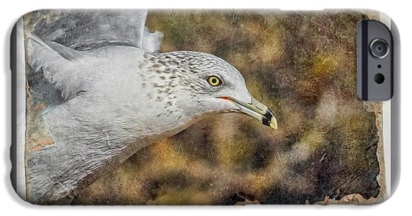 Seagull iPhone Cases - Seagull 4 iPhone Case by Ernie Echols