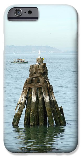 Birds iPhone Cases - Seagull At Fishermans Wharf 2 iPhone Case by Christopher Winkler