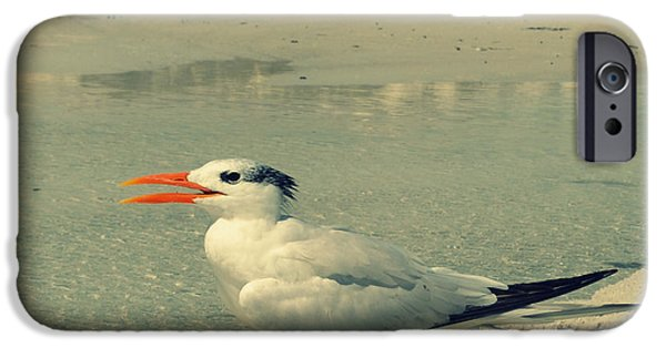 Sea Birds Digital Art iPhone Cases - Seagull at the Beach iPhone Case by Patricia Awapara