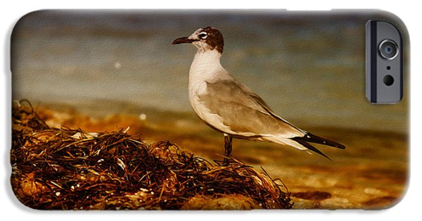 Flying Seagull iPhone Cases - Seagull At The Keys iPhone Case by Deborah Benoit