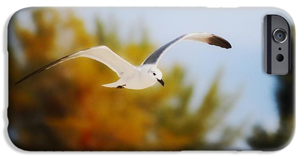 Flying Seagull Mixed Media iPhone Cases - Seagull Balance iPhone Case by Barbara Chichester