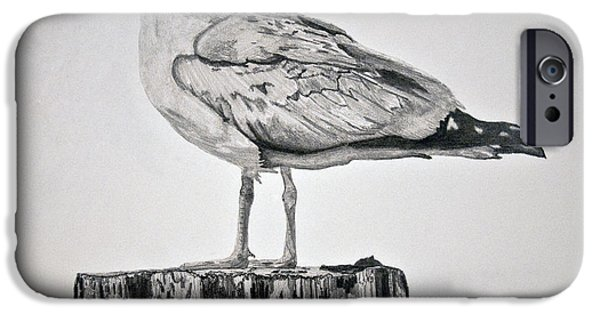 Seagull Drawings iPhone Cases - Seagull iPhone Case by Chamar Radloff