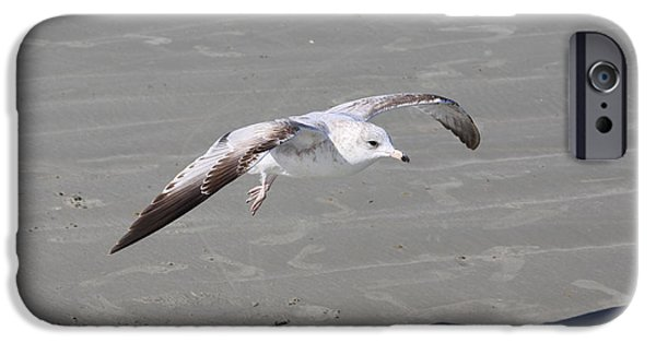 Seagull Pyrography iPhone Cases - Seagull iPhone Case by Chris Thomas
