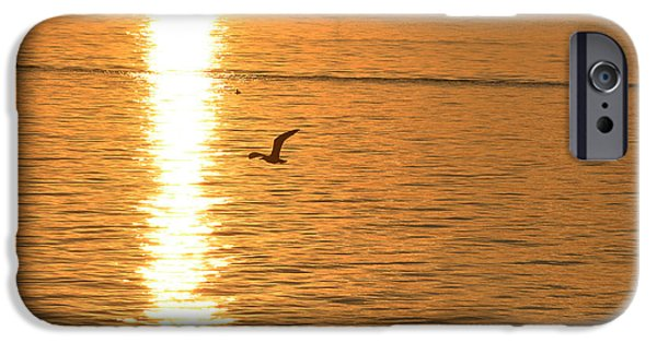 Flying Seagull iPhone Cases - Seagull flying into the Sunset iPhone Case by Toby McGuire