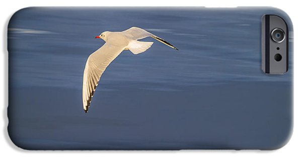 Flying Seagull iPhone Cases - Seagull Flying Low Over Reykjavik iPhone Case by Panoramic Images