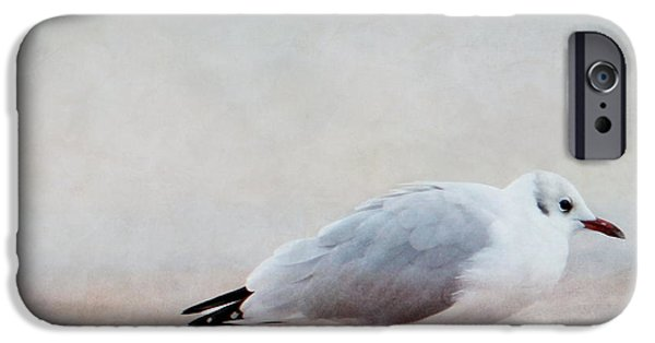 Seagull iPhone Cases - Seagull iPhone Case by Heike Hultsch