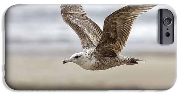Flying Seagull iPhone Cases - Seagull in Flight iPhone Case by Belinda Greb