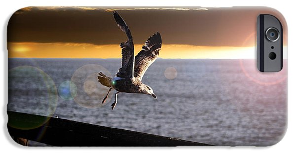 Flying Seagull iPhone Cases - Seagull in Flight iPhone Case by Martin Newman