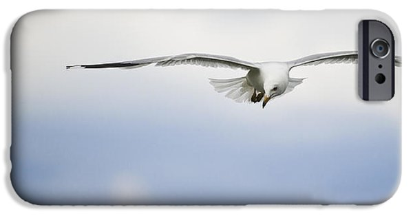 Flying Seagull iPhone Cases - Seagull In Flight iPhone Case by Richard ONeil