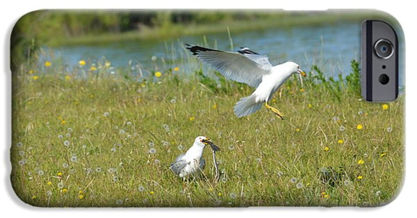 Seagull Pyrography iPhone Cases - Seagull Landing iPhone Case by Frank Parkinson