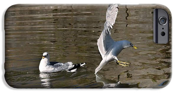 Flying Seagull iPhone Cases - Seagull iPhone Case by Leif Sohlman