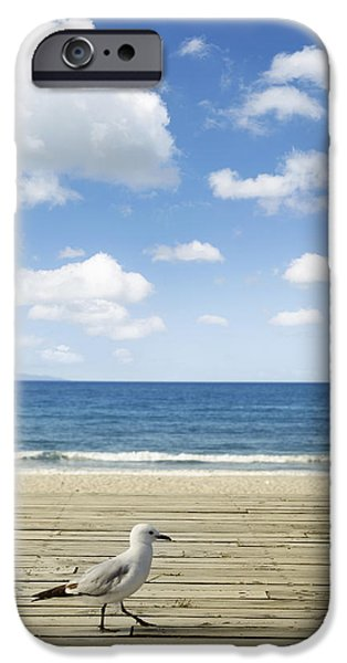 Pathway iPhone Cases - Seagull iPhone Case by Les Cunliffe