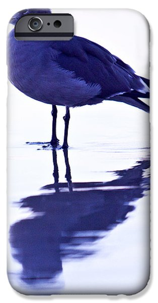 Rust iPhone Cases - Seagull iPhone Case by Nikolas Kolenich