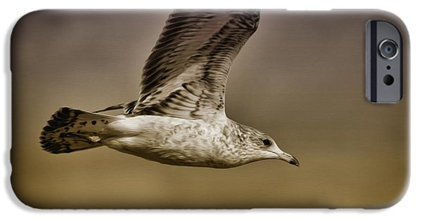 Flying Seagull iPhone Cases - Seagull Oil iPhone Case by Deborah Benoit
