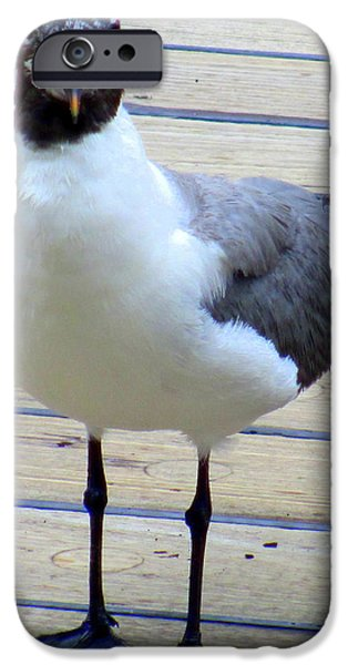 Seagull iPhone Cases - Seagull On Board iPhone Case by Randall Weidner