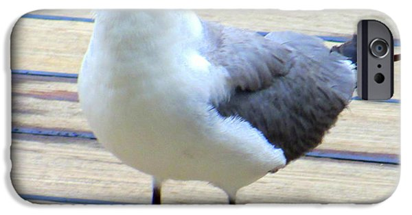 Seagull iPhone Cases - Seagull On Deck iPhone Case by Randall Weidner
