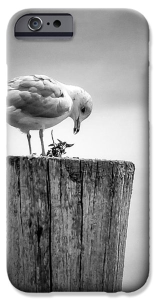 Recently Sold -  - Sea Birds iPhone Cases - Seagull on Pier  iPhone Case by Brian Caldwell