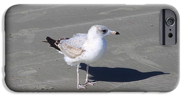 Seagull Pyrography iPhone Cases - Seagull on the Hunt iPhone Case by Chris Thomas