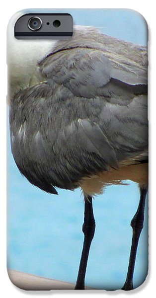 Seagull On The Rail iPhone Case by Randall Weidner