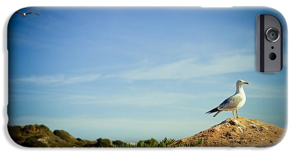 Flight Pyrography iPhone Cases - Seagull On The Rock iPhone Case by Raimond Klavins