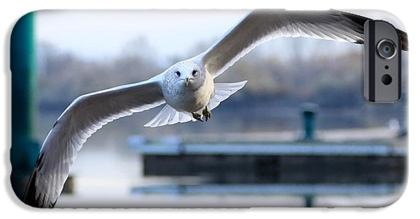Flying Seagull iPhone Cases - Seagull over the Pier iPhone Case by Carol Groenen
